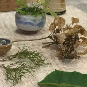 dryed and fresh plants on a table